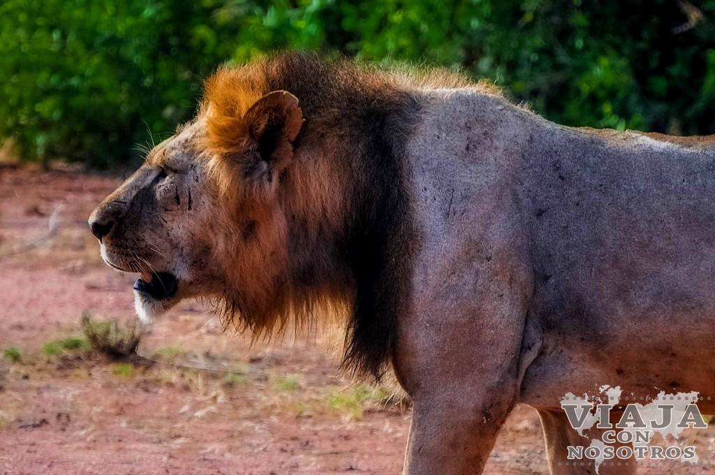 Todos los animales que se ven en safari en Kenia