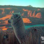 Chivay – Puno: Yanke, Mirador Cruz del Cóndor, Maca