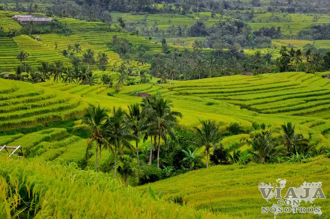 Los arrozales más bonitos de bali