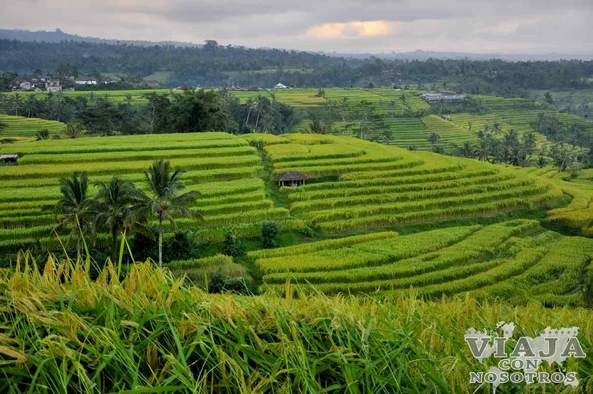 Los arrozales que no debes perderte en Bali