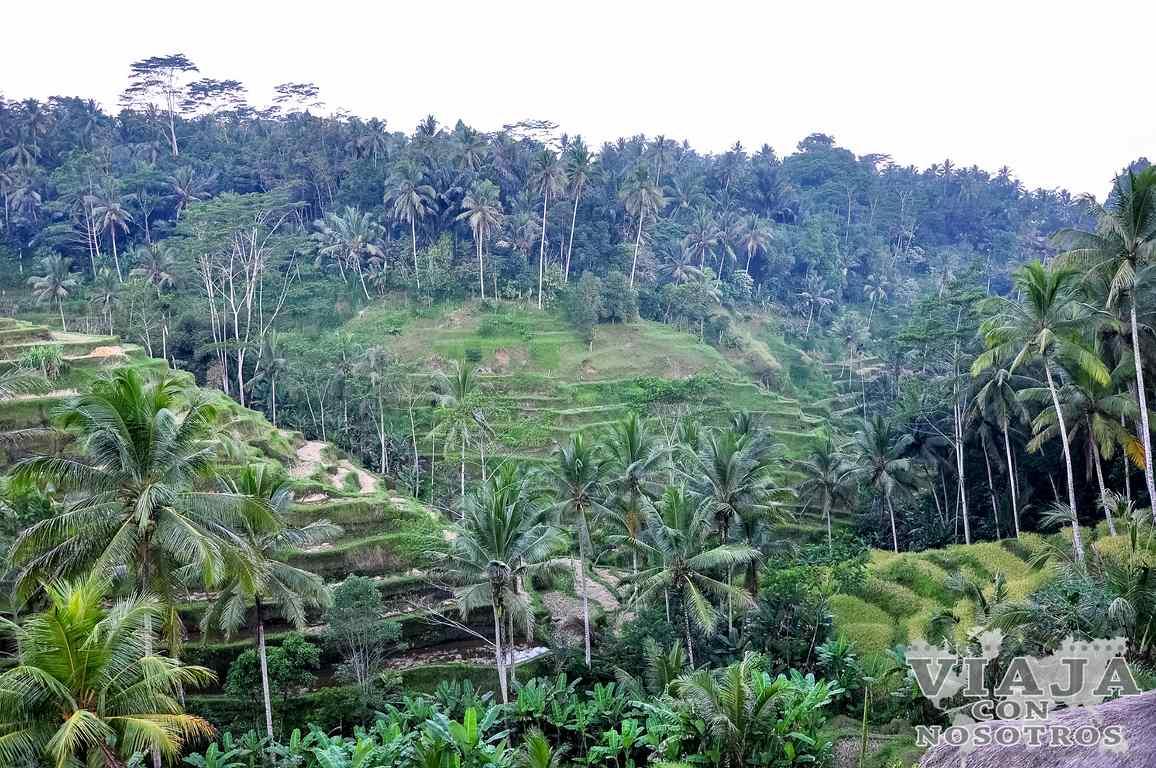 Como visitar los arrozales de Tegallalang
