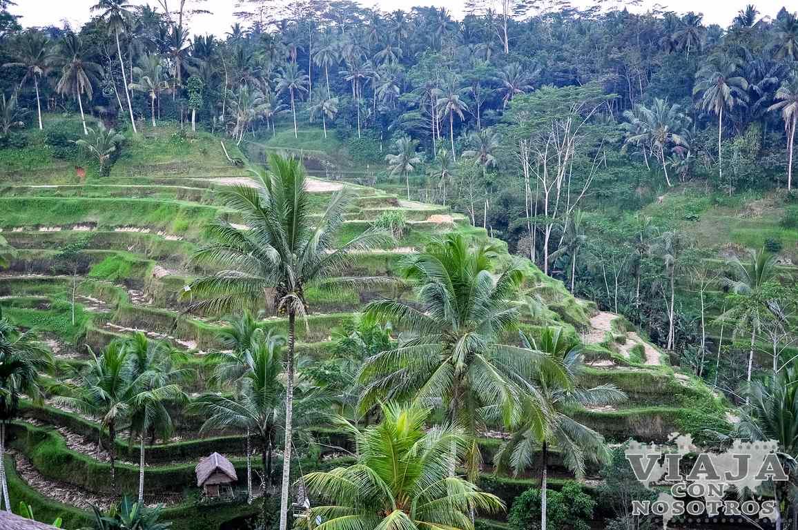 Que arrozales de Bali son más bonitos