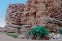 Precios de tours al desierto de Wadi Rum