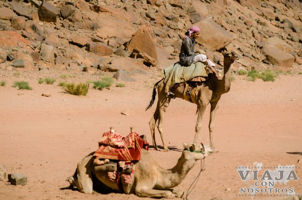 Que ver en el desierto de Wadi Rum