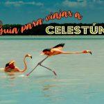 Merida: Celestun