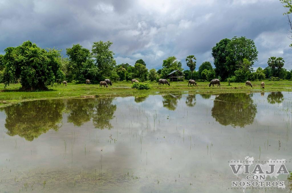 que ver y que hacer en las 4000 islas de laos