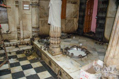 El templo de las ratas de Bikaner