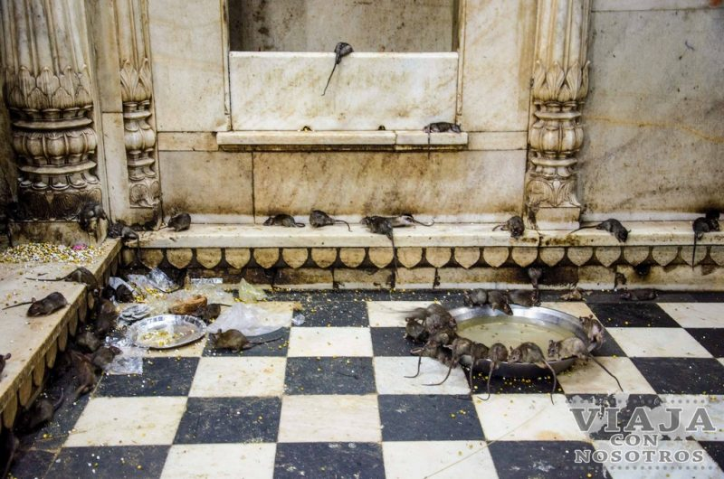Como llegar al Templo Karni mata o Templo de las ratas