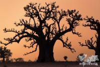 Los mejores lugares que ver en Senegal