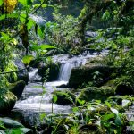 Boquete: unos días en plena naturaleza panameña