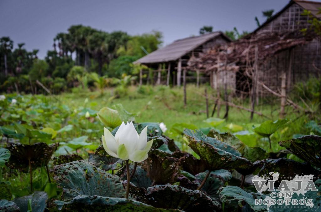Pueblos flotantes que visitar desde Siem Reap