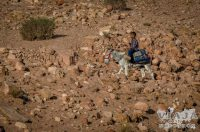 Guía completa y consejos para visitar Petra