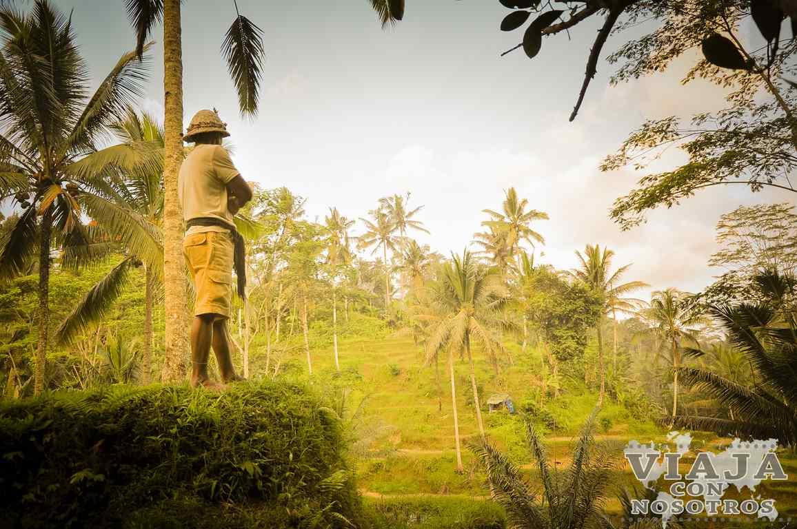 Consejos y recomendaciones para viajar a Bali