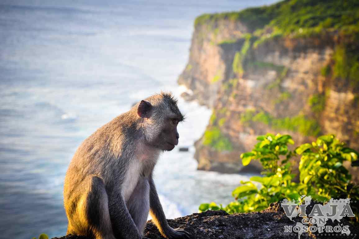 Que ver en Bali en dos semanas