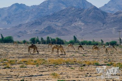Como ir de Jerusalen a Wadi Rum por libre