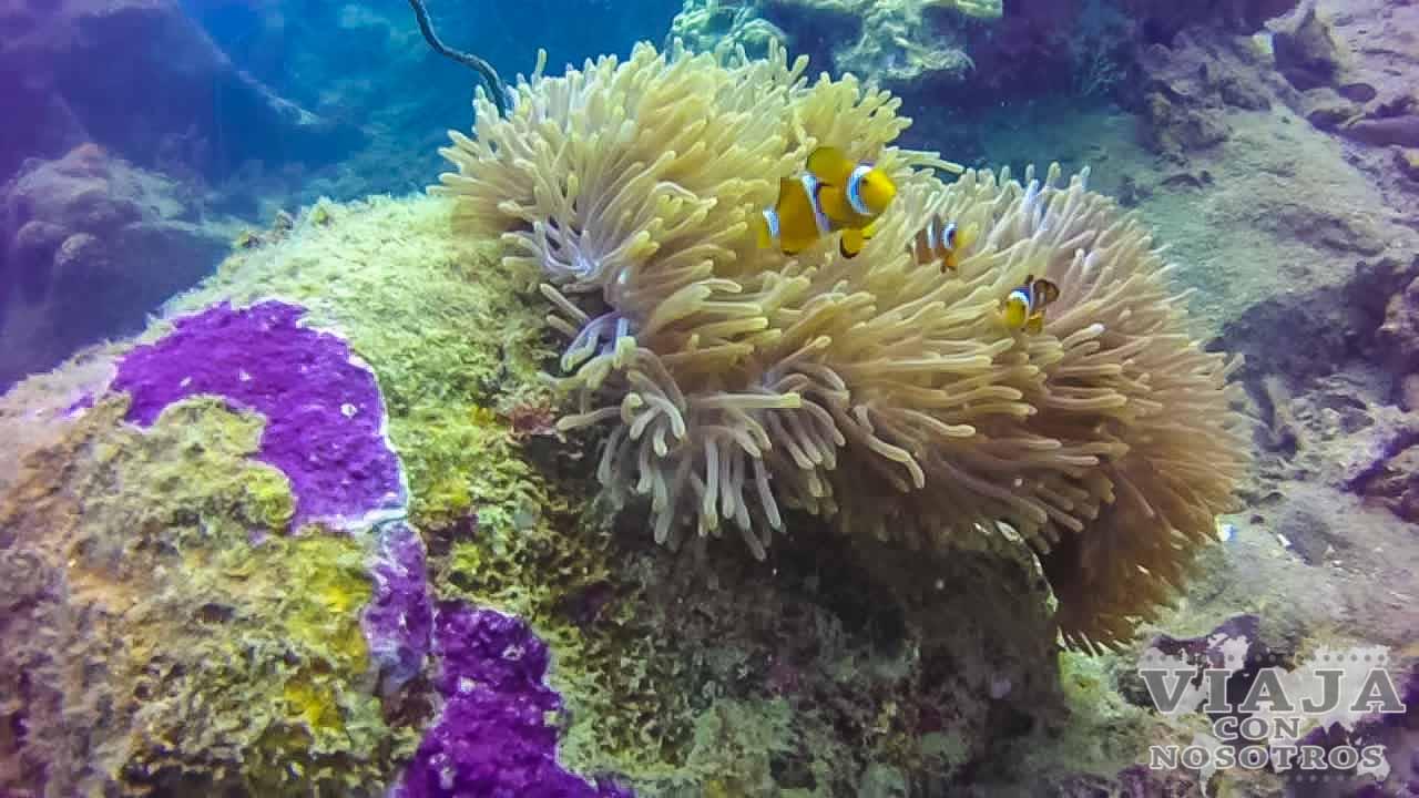Buceo en las Islas Perhentian
