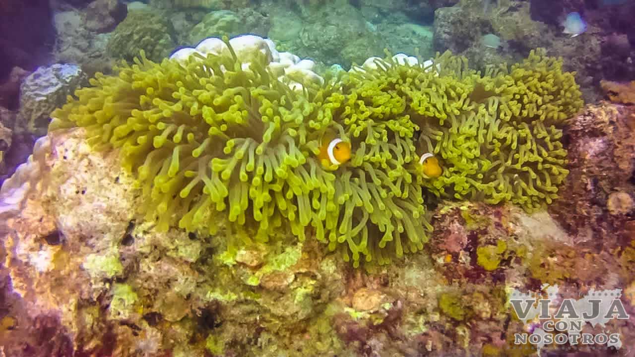 Que Islas Perhentian elegir