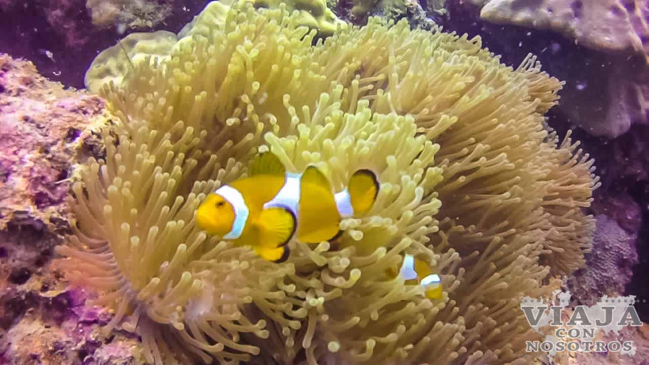 Información útil de las Islas Perhentian