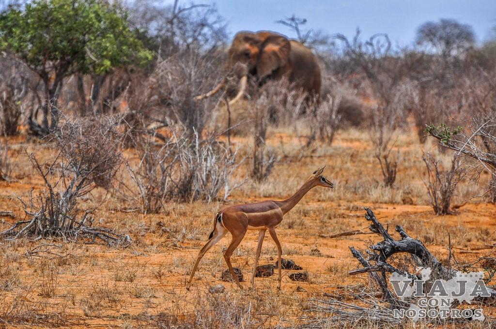 Se puede bucear en Kenia
