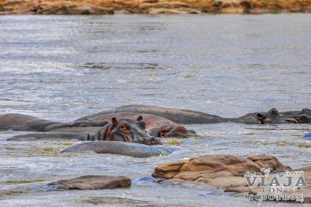 Buceo en Malindi en Kenia