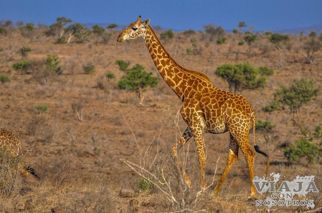 Cuanto cuesta un safari en Kenia