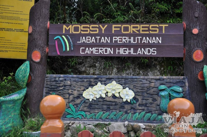 Bosque Mossy Cameron Highlands
