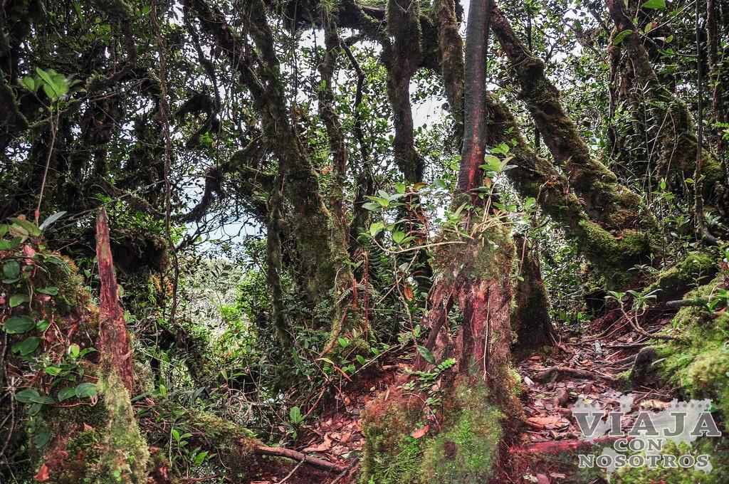 Mega guía para viajar a Cameron Highlands