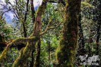 Lugares que ver si viajas a Cameron Highlands
