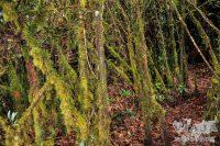 Mejores imágenes de Cameron Highlands