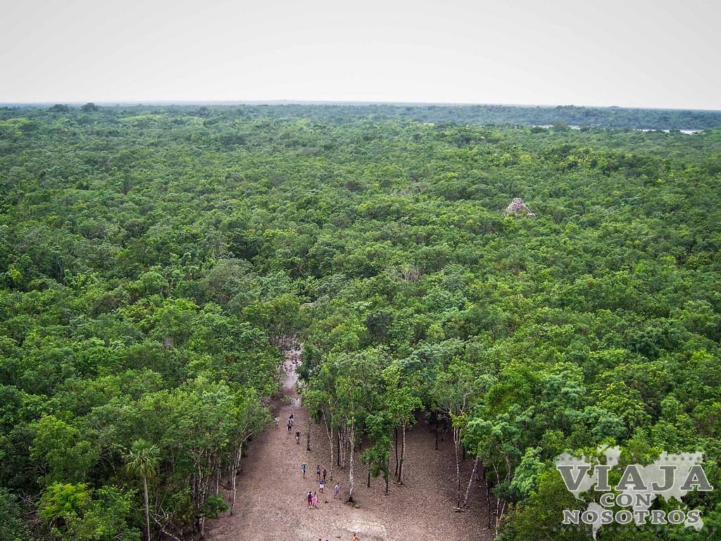 Selva en la Riviera Maya
