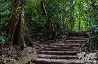 Es seguro viajar a Palenque