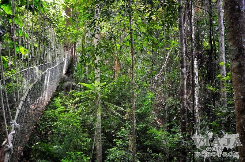 Flora y fauna de Taman Negara