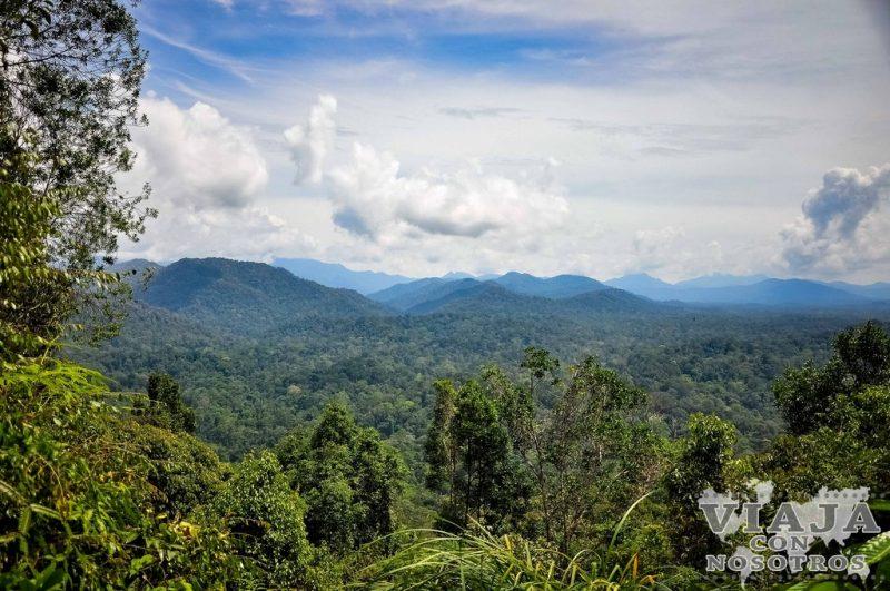 Todo lo que debes saber si viajas a Taman Negara