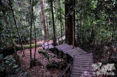 Actividades para hacer en Taman Negara
