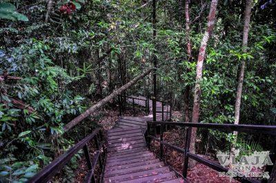 Guía completa de la selva de Taman Negara