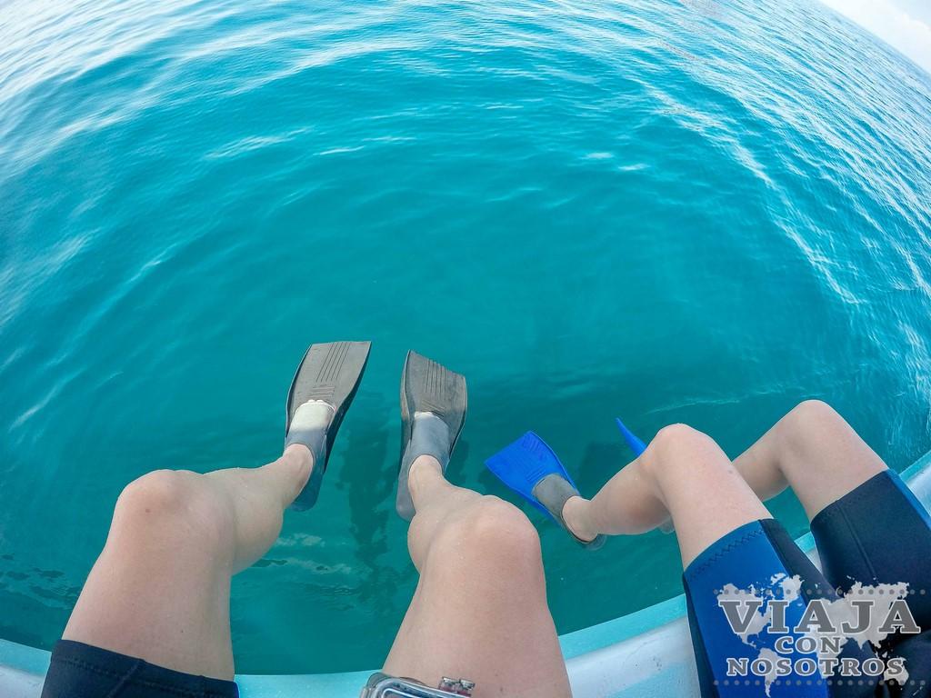 Donde contratar el tour del Tiburón Ballena en Tulum