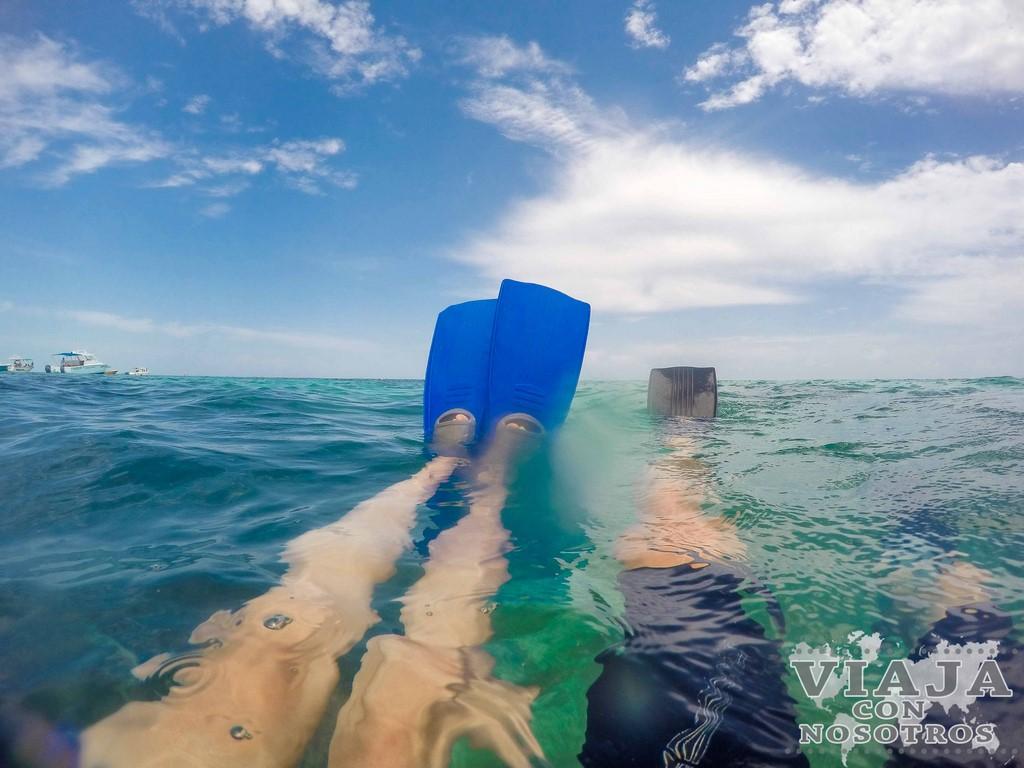 Quieres nadar con el tiburón Ballena en la Riviera Maya