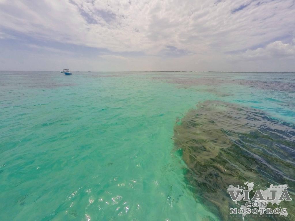 Precio para nadar con el tiburón ballena en la Riviera Maya