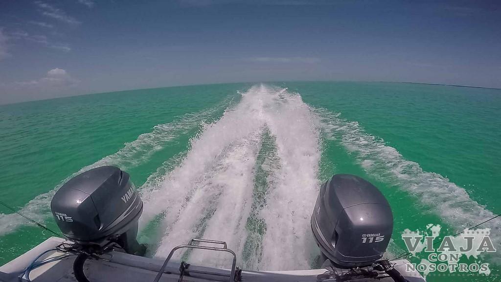Donde nadar con el Tiburón Ballena en México