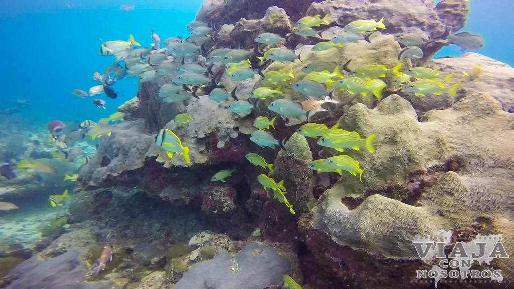 Mejores imágenes del buceo en Tulum