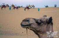 Como visitar el desierto de Jaisalmer