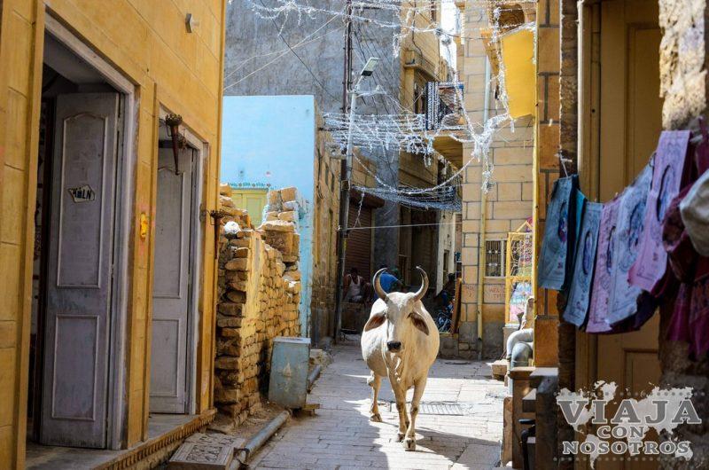 Qué ver en Jaisalmer: La ciudad dorada y el Desierto del Thar
