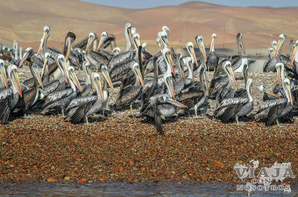 Cuantos días para ver en Paracas