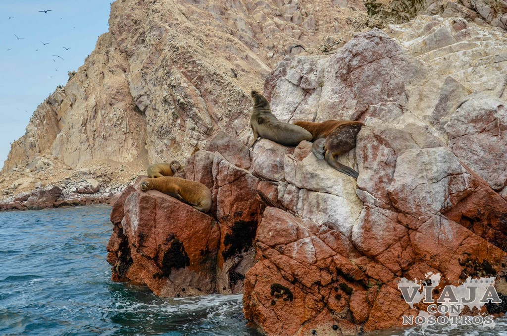 Lugares imprescindibles para ver en Paracas