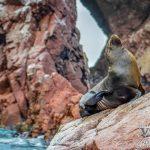 Paracas – Nazca: Islas Ballestas