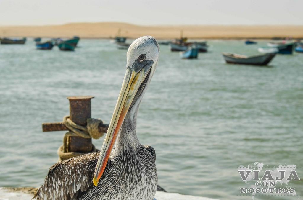 Tours en Paracas, Islas Ballestas y Reserva Nacional