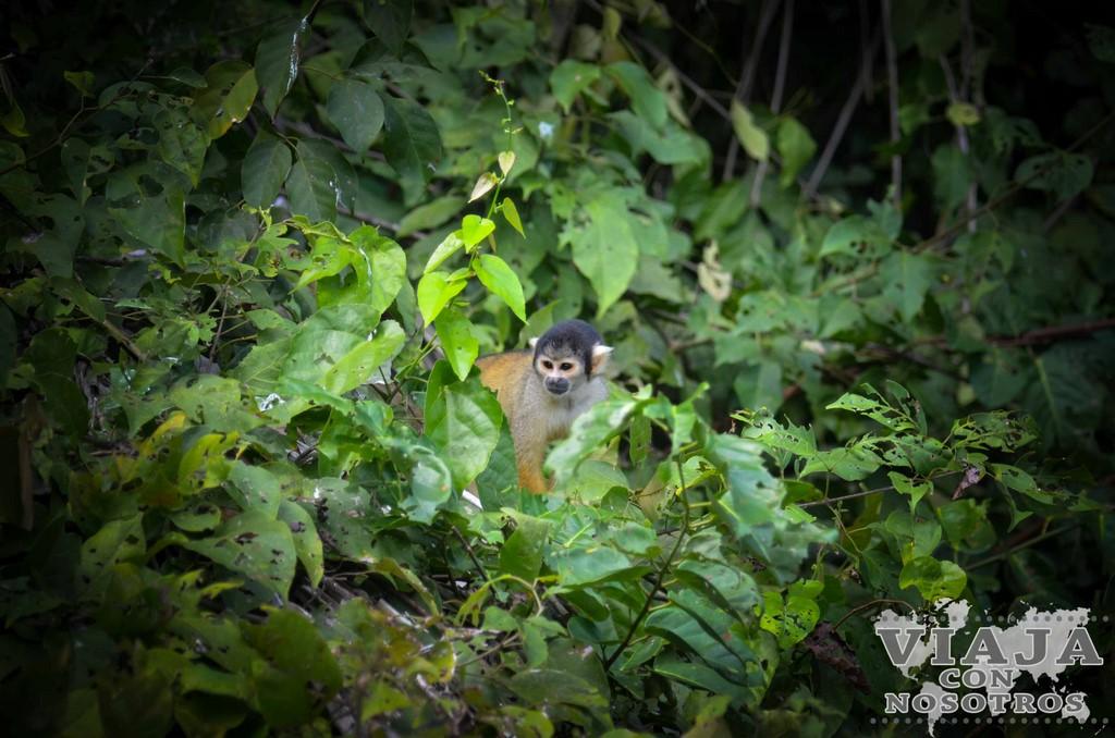 Que animales se ven en Puerto Maldonado