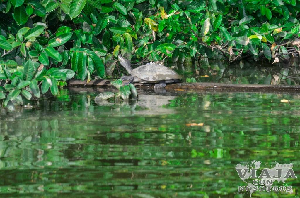 Viajar a la selva: Tambopata - Madre de Dios
