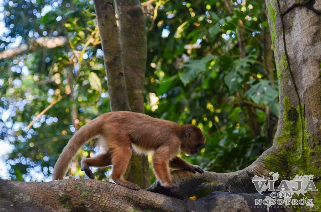 Recomendación visita zona selva Puerto Maldonado