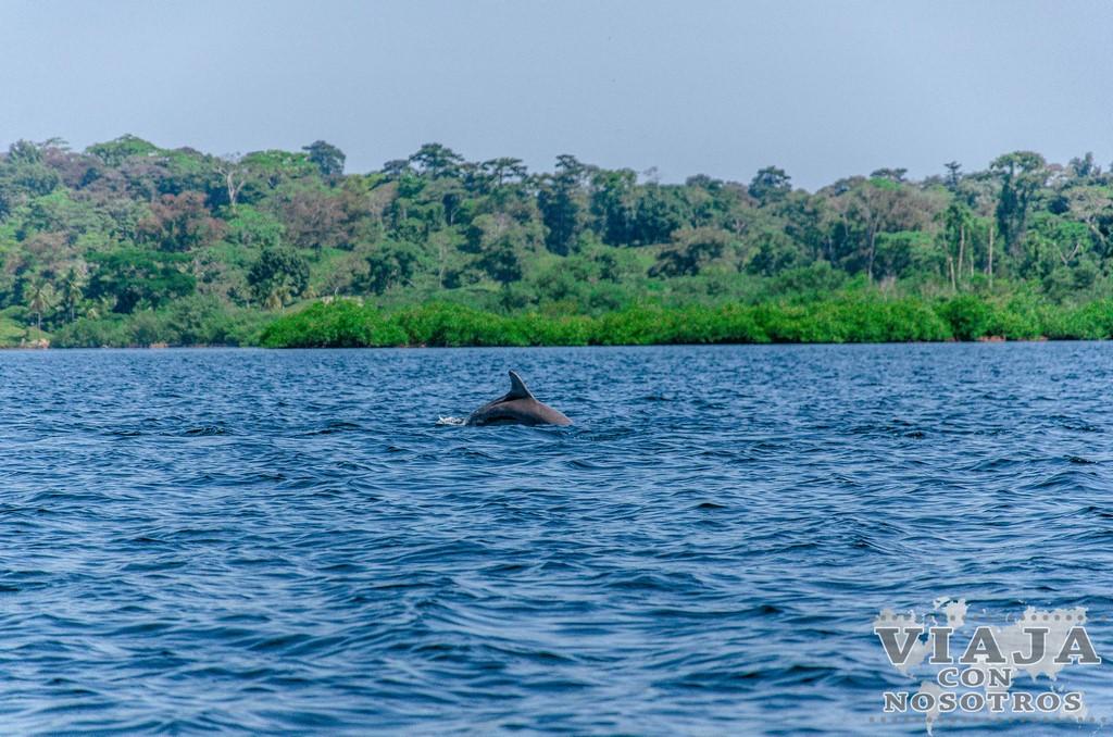 Los mejores 7 lugares para visitar en Bocas del Toro